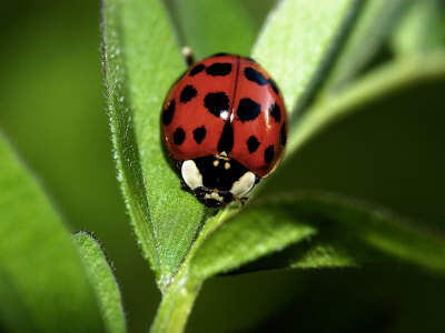ladybugblog