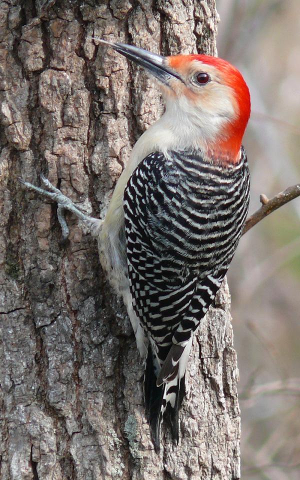 bird,tree