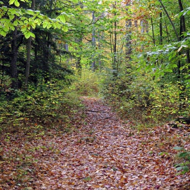 3. Trail