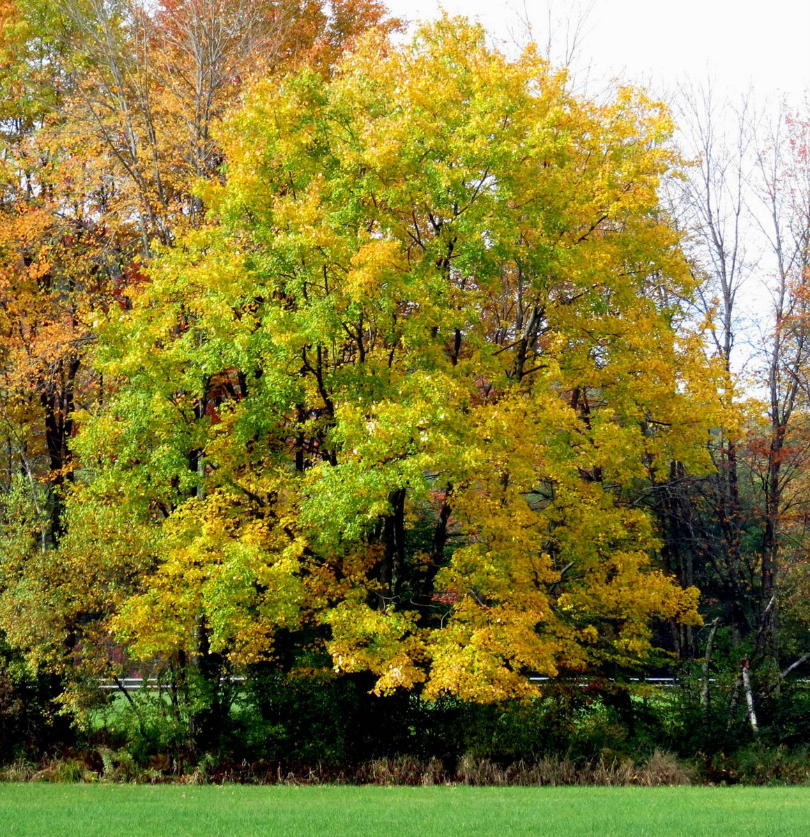 More Fall Colors – Writing Out Loud