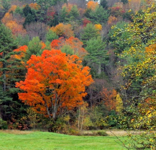 4. Lone Maple Tree